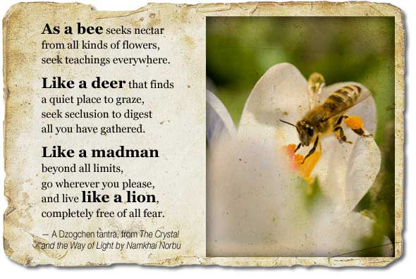 Bee Quotes: Famous Quotes About 'Bee'