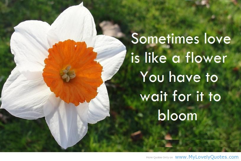 Bloom Quotes Inspiration Love Quote Flower  Page 8  The Best Love Quotes