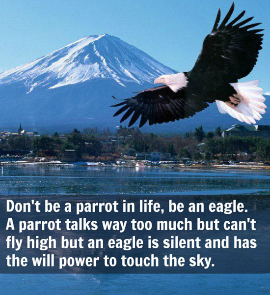 The Eagle Has Landed Quote: Famous Quotes About 'Eagle'