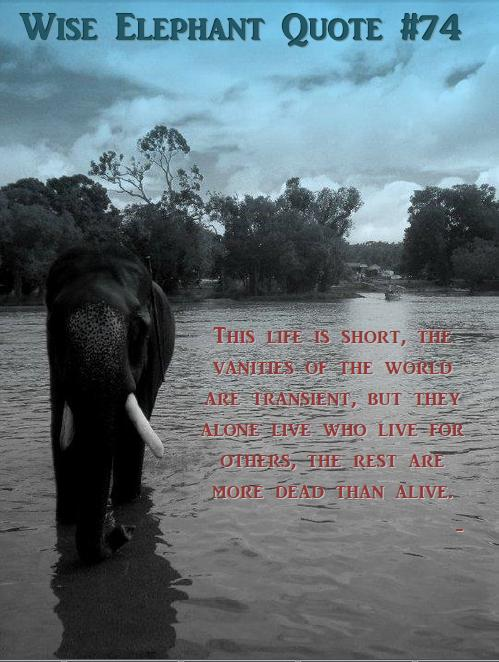 Elephant Quotes Enchanting Famous Quotes About Elephants Quotes