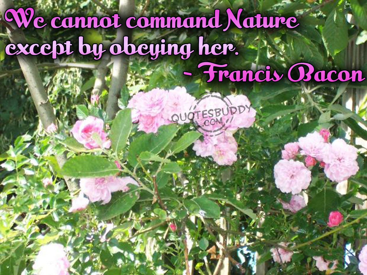 Environmental quote #7