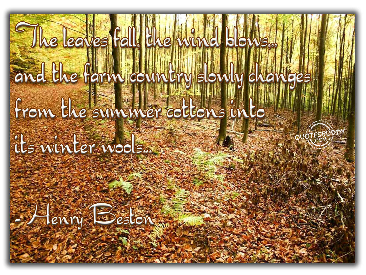 Fall quote #2