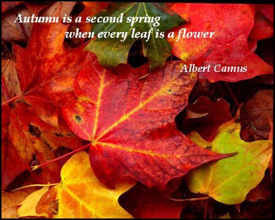 Fall quote #7