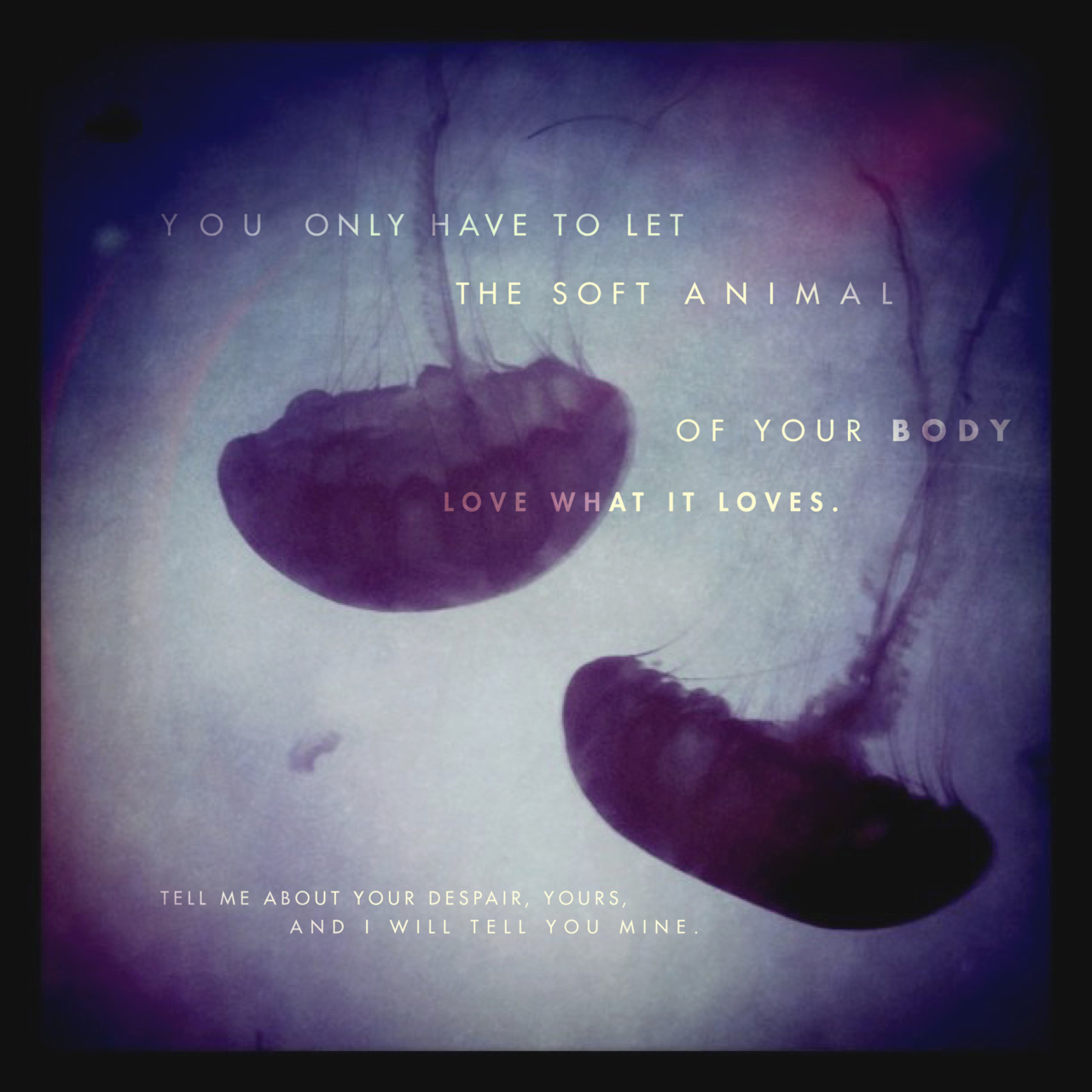 Mary Oliver Love Quotes: Mary Oliver's Quotes, Famous And Not Much