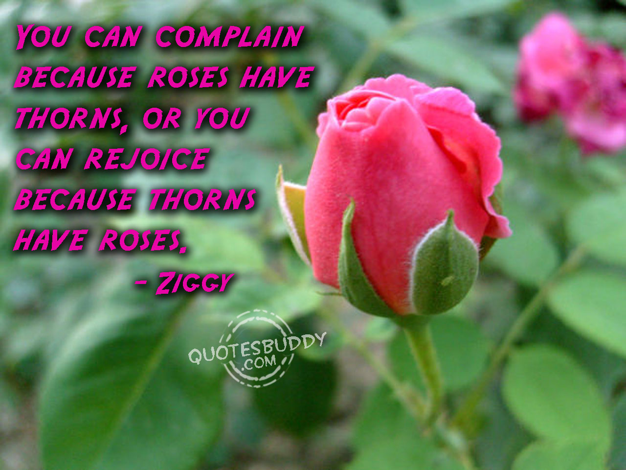Famous Quotes About 'Roses'