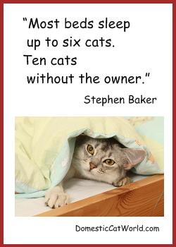 Stephen Baker's quote #6