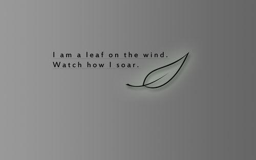 Wind quote #4