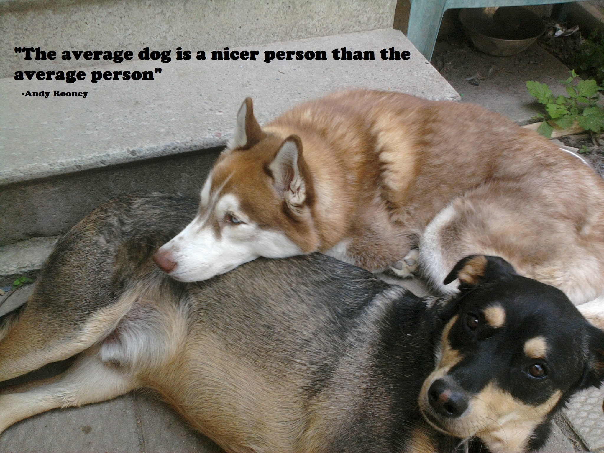 Famous Quotes About 'Dog'