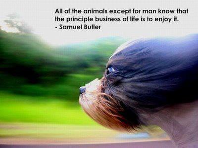 Samuel Butler's quote #3